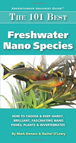 Introducing black mollies platys and swordtails to the for Best freshwater aquarium fish combination