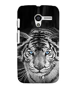 EPICCASE White tiger Mobile Back Case Cover For Moto X (Designer Case)