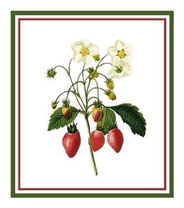 Strawberries Botanical By Pierre Joseph