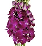 Fresh Flowers - Deep Purple Dendrobium Orchids