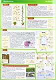 Image de Lerntafel: Pflanzenphysiologie im Überblick (Lerntafeln Biologie)