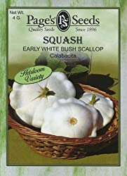 Squash Early White Bush Scallop (Summer)
