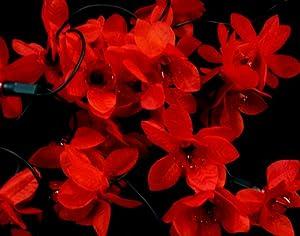 20 Red Poinsettia Fairy Lights