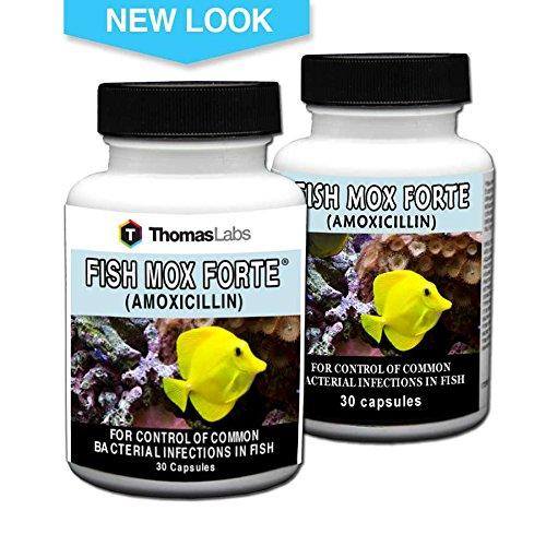 Amoxfin 500mg 30 capsules for fish dealtrend for Fish mox amazon