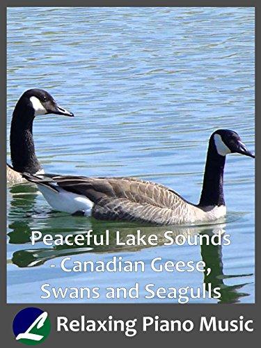 Peaceful Lake Sounds