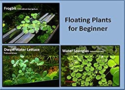 Aquarium Floating Plants Package, 12 Amazon Frogbit , 12 Dwarf Water Lettuce, 12 Water Spangles by G\'z