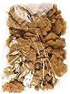 Sees Candies 1 lb. 8 oz. Peanut Brittle