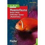 Meeresfauna. Fische: Rotes Meer. Indischer Ozean (Malediven). 396 Arten in Wort und Bild