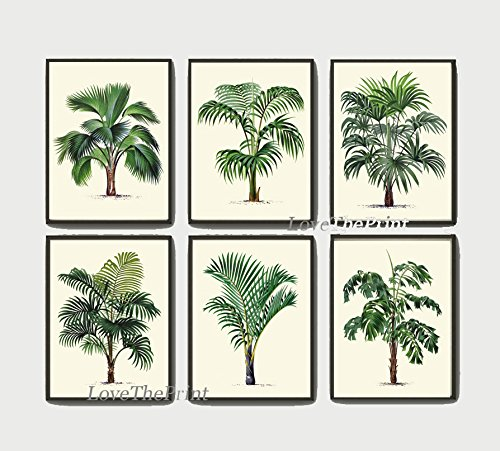 Palm-Tree-Print-Set-of-6-Antique-Art-Beautiful-Green-Plants-Tropical-Garden-Nature-Home-Room-Wall-Decor-Unframed-LPH