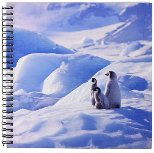 3drose-db-74367-1-emperor-penguin-on-ice-mound-snow-hill-island-antarctica-an02-ksu0029-keren-su-dra