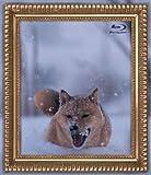 レオナルド犬プリオ [Blu-ray]