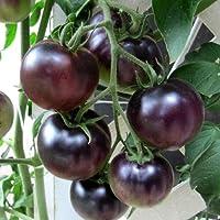 OSU Blue Tomato 4 Plants - The Worlds 1st Blue Tomato,Rare