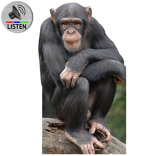 Chimpanzee Cardboard Cutout with Sound