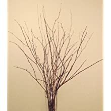 Green Floral Crafts Small Birch Branches 2-3 Feet Tall, Pack of 18 - Natural