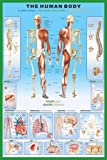 1art1 36800 Poster Le Corps Humain Anatomie 91 X 61 cm