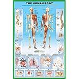 """1art1 36800 Der Menschliche K�rper - Anatomie Poster (91 x 61 cm)von """"1art1"""""""