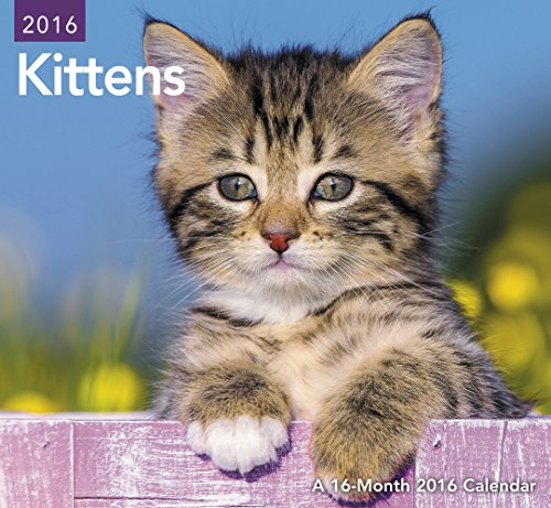 Kittens Mini Wall Calendar (2016)