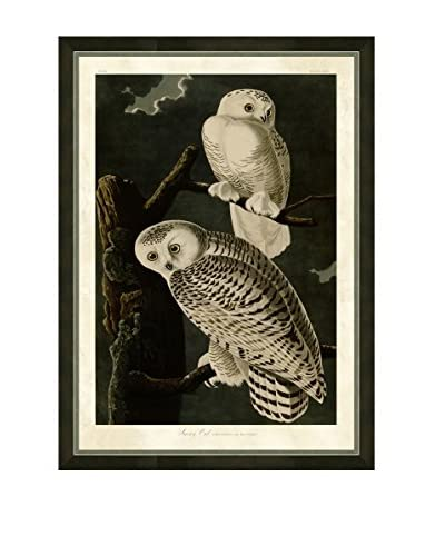 Art Source Snowy Owl Print , Multi
