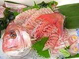 天然真鯛(1尾 1kg 日本海産)