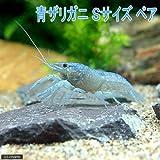 (ザリガニ)青ザリガニ Sサイズ(約2~5cm)(1ペア) 本州・四国限定[生体]