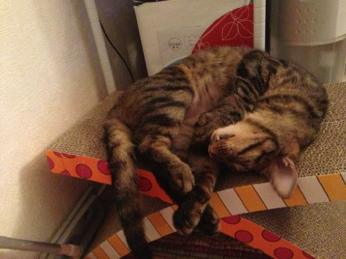 Petstages soothing cat easy life hammock and scratcher 871864003922 - Cat hammock scratcher ...