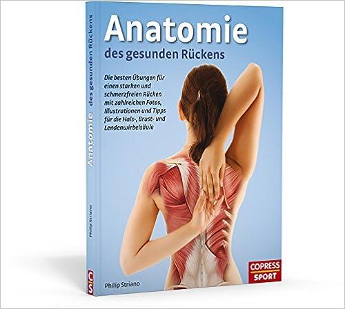 Hals- und Brustwirbelsäule - Ihr Hals und Rückenmitte Anatomie