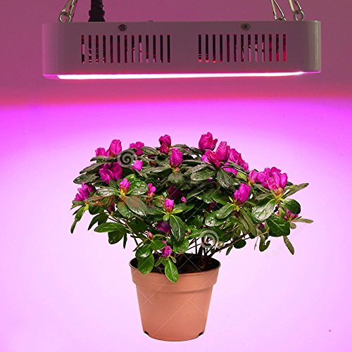 runqiao 300w led indoor hydroponics pflanze led grow lampe f r gew chshaus pflanze vollspektrum. Black Bedroom Furniture Sets. Home Design Ideas