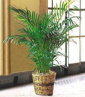 Palm Tree Lighting front-424655