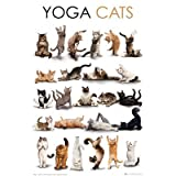 Yoga Cats Poses Art Print Poster