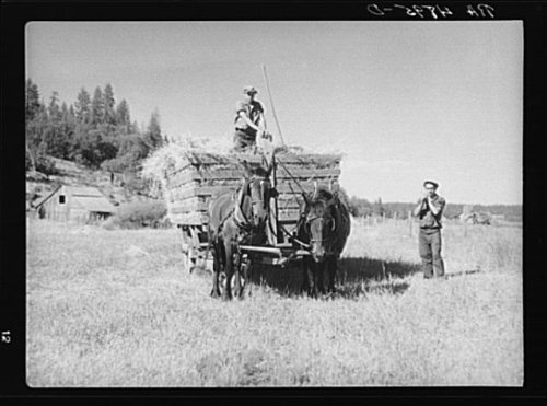 Loading a Hay Wagon in Goldendale, Washington 1936