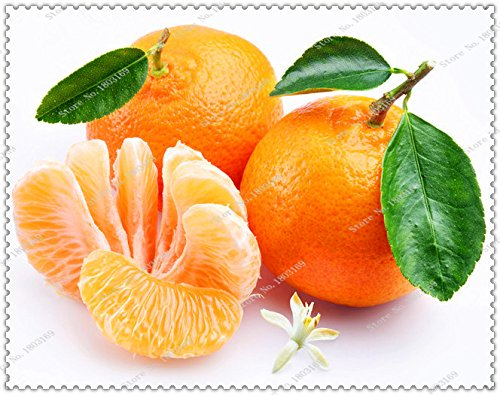 graines-100pcs-sac-orange-balcon-patio-pot-arbres-fruitiers-graines-mandarine-agrume-bonsai-usine-ma
