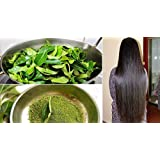 Go Organic Curry Leaves Powder Curry Leaves To Grow Long, Strong And Shiny Hair ( 200 Grm )