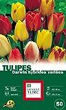 Ernest TURC Pack de 50 Bulbes Tulipe Darwin Hybride Variées Variées 13,5 x 7 x 23 cm 108986