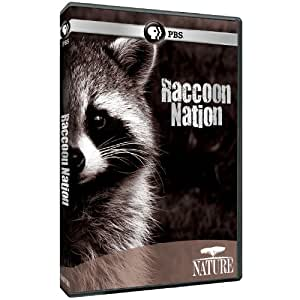 Nature: Raccoon Nation