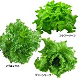 富山の美味しい水で育った無農薬新鮮野菜:採れたてレタス3種類(6個入)」/洗わずにそのまま食べれる