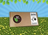 New Mini Grow Your Own Venus Fly Trap Kit