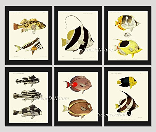 fish-print-set-of-6-antique-frd-beautiful-tropical-black-white-stripe-colorful-illustration-natural-