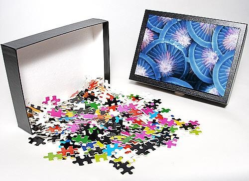Photo Jigsaw Puzzle Of Acanthoica Acanthifera, Coccosphere From Mary Evans