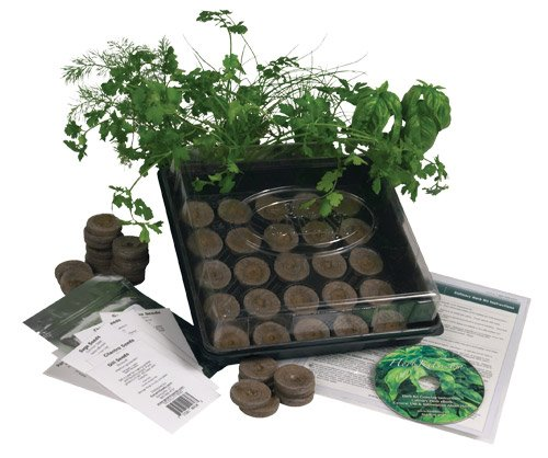 Indoor Culinary Herb Garden Starter Kit- Start Growing Fresh Cooking Herbs & Spices- Great Gift Idea!- Seeds: Parsley, Thyme, Cilantro, Basil, Dill, Oregano, Sweet Marjoram, Chives, Savory, Garlic Chives, Mustard, Sage