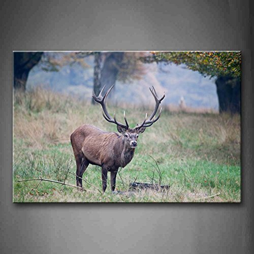 Deer With Long Antler On Grass Wall Art Painting The Picture Print On Canvas Animal Pictures For Home Decor Decoration Gift