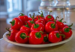 Tasty Hot Cherry Pepper 4 Plants - Medium