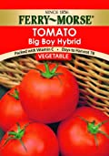 Ferry-Morse 1395 Tomato Seeds, Big Boy Hybrid (590 Milligram Packet)