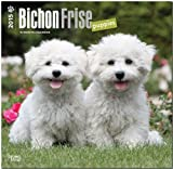 BT Bichon Frise Puppies 2015 Wall
