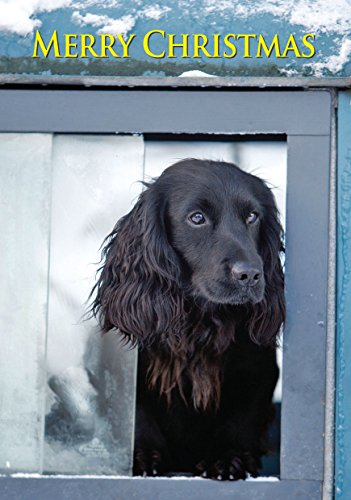 working-cocker-spaniel-dog-in-land-rover-christmas-card-by-charles-sainsbury-plaice-large-a5-seasona