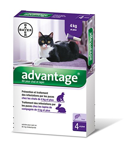 Bayer Advantage 80 Chat/Lapin 4-10 kg 4 pipettes antiparasitaires'