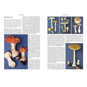 Mushrooms and Other Fungi Livre en Ligne - Telecharger Ebook