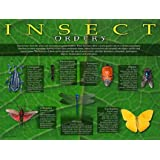 Insect Orders posters