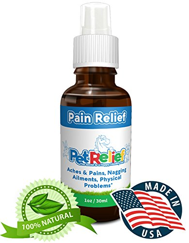 All Natural Pain Killer For Dogs