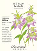 Bee Balm Dotted Mint