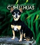 Chihuahuas Weekly 2006 Calendar